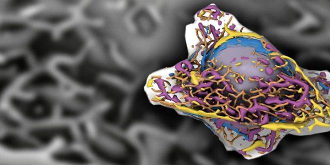 الگوریتم های یادگیری عمیق برای شناسایی ساختارهای موجود در سلول های زنده