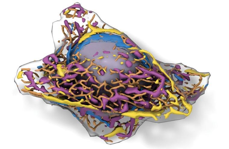 یادگیری عمیق تشخیص سلول ها