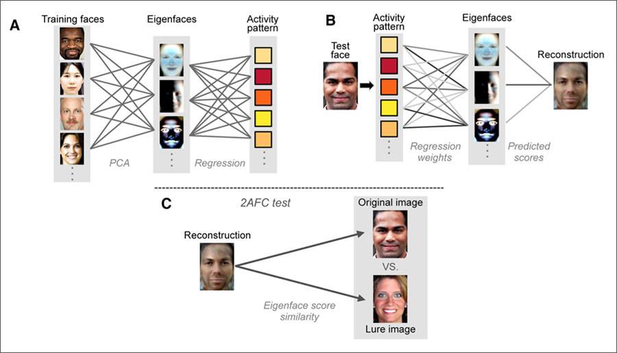 هوش مصنوعی ذهن خوانی الگوریتم