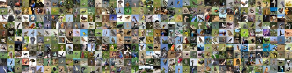 تصاویر پرندگان مجموعه داده