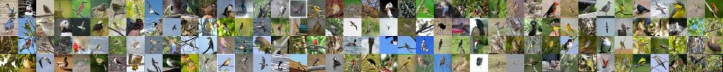 شبکه عصبی تشخیص پرندگان مثبت صحیح