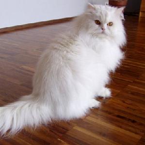 تصویر هک شده گربه با محدودیت